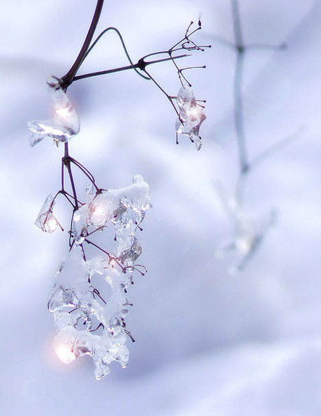 160209s1_glaze_ice_cranberry